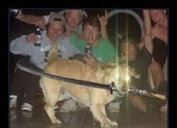 Enlace a El perro de la katana