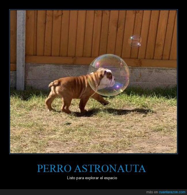 astronauta,burbuja,momento exacto,perro