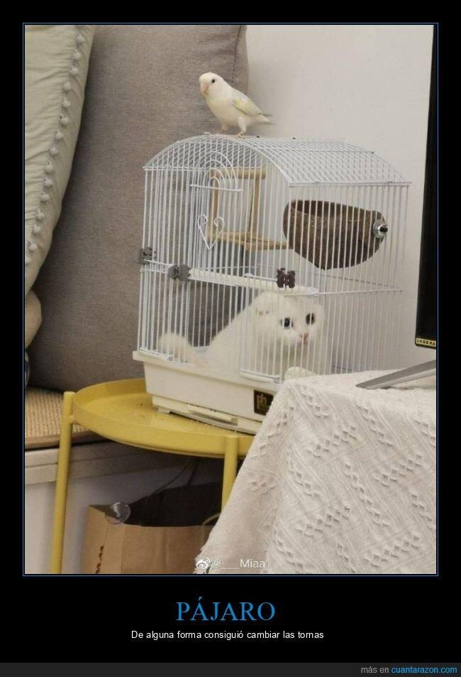 gato,jaula,pájaro,wtf