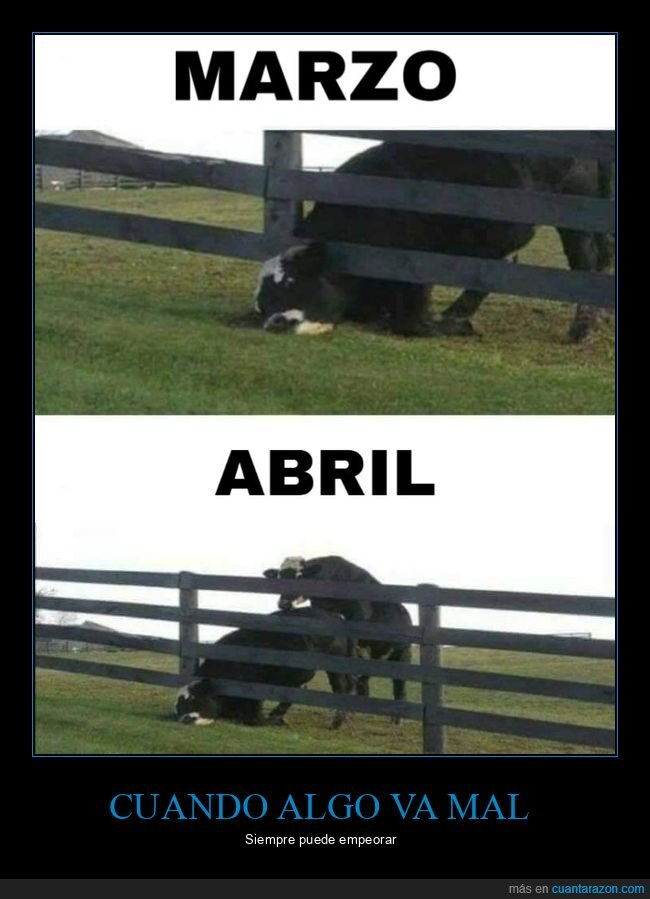 abril,coronavirus,fails,marzo,vaca,vacas