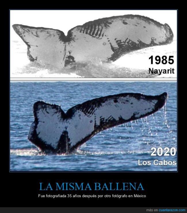 35 años,ballena,fotografiada,lugares