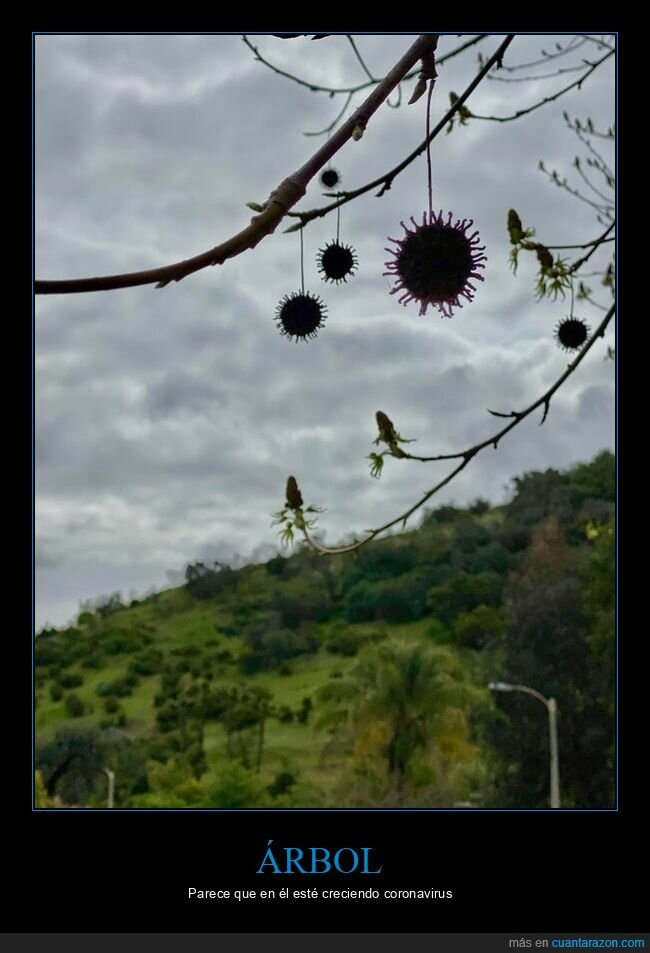 árbol,coronavirus,wtf