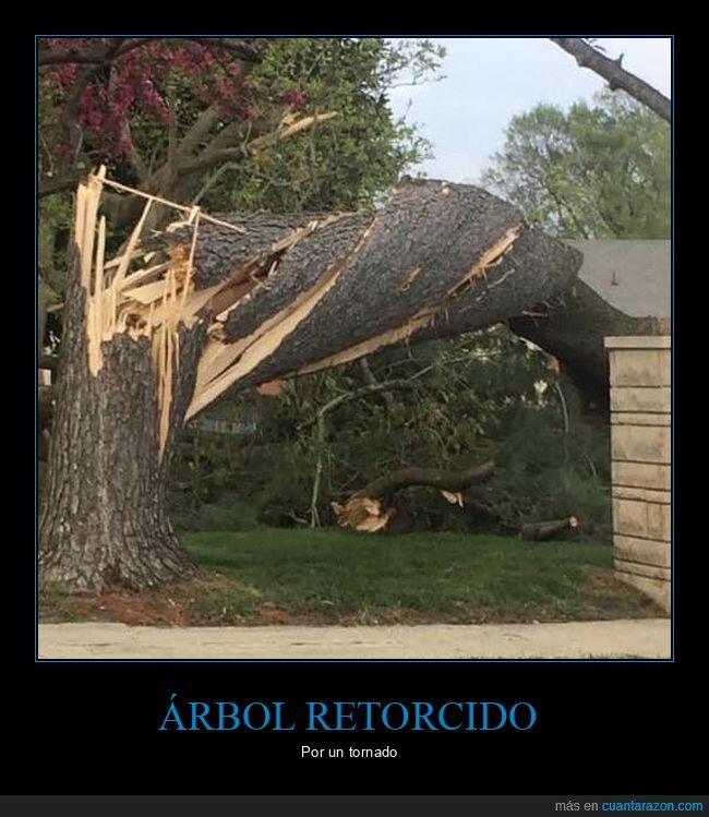 árbol,retorcido,tornado