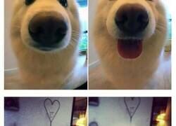 Enlace a Fotos de perros antes y después de decirles
