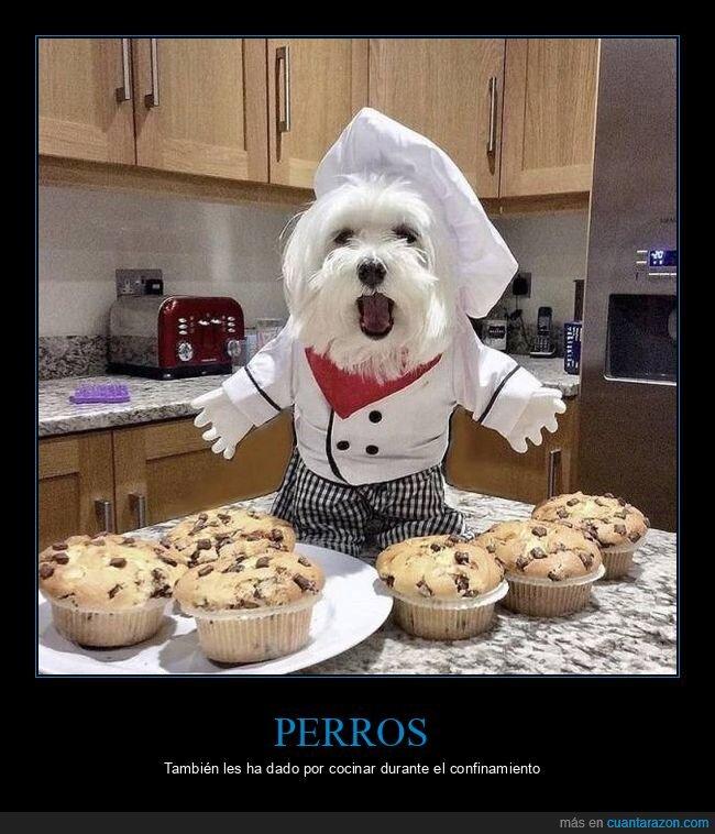 cocinando,muffins,perro