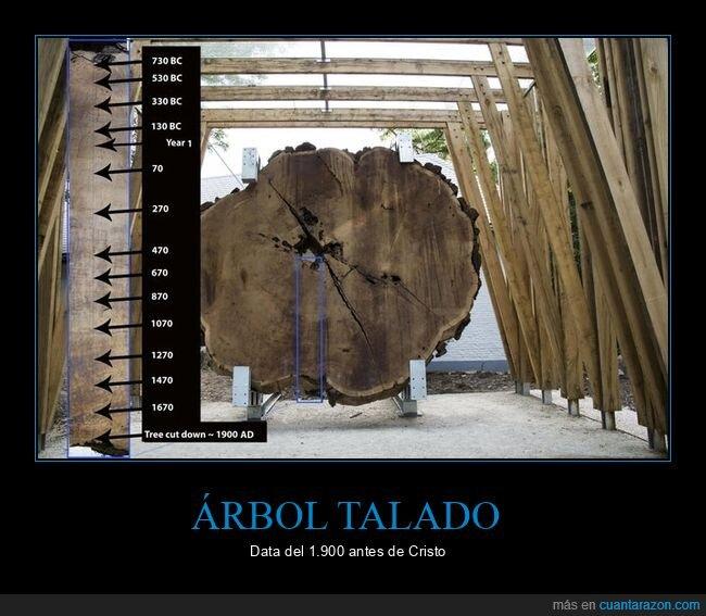 antiguo,árbol,talado