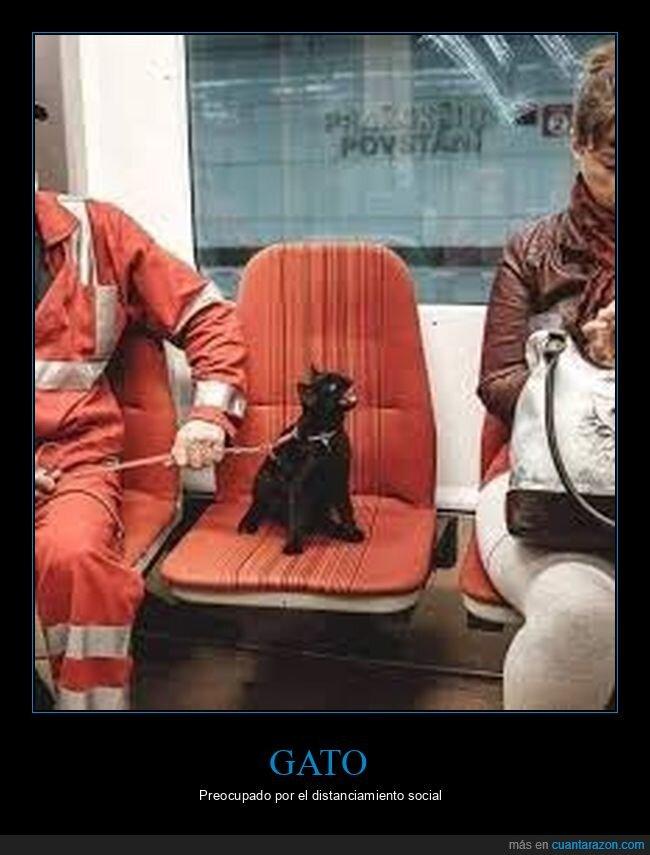 asiento,coronavirus,distanciamiento social,gato