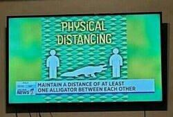 Enlace a Alligator como unidad de longitud
