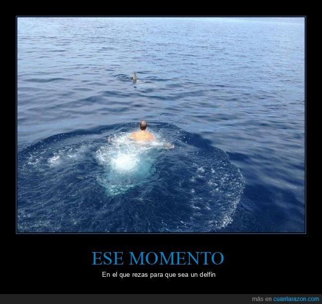aleta,fails,mar,nadando