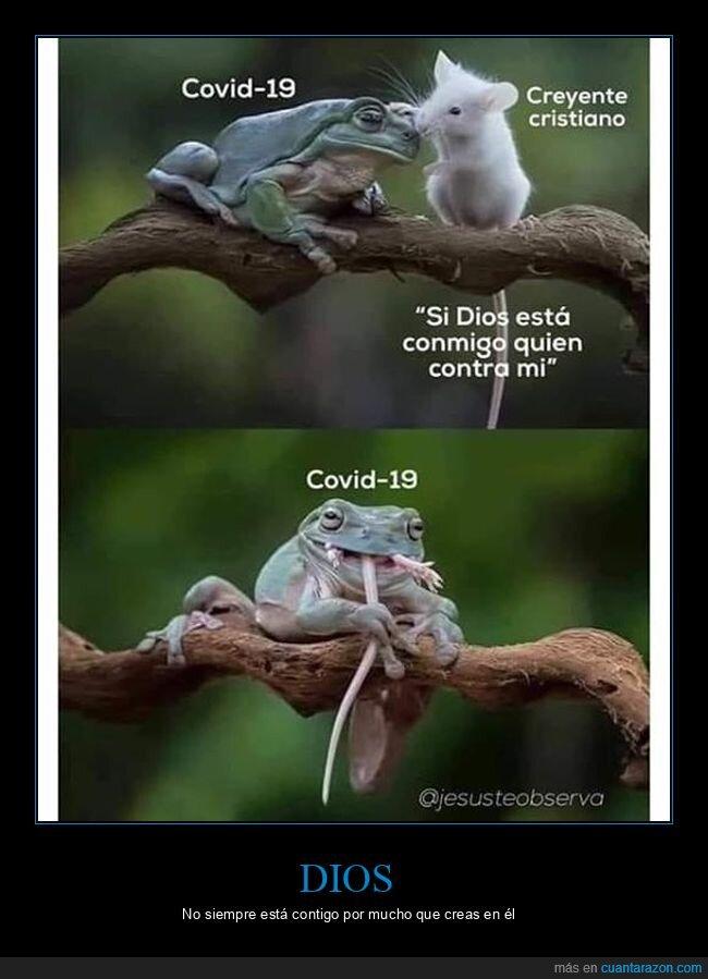 coronavirus,dios,rana,ratón