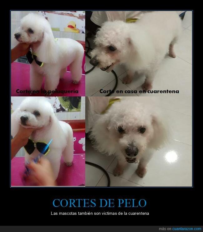 corte de pelo,fails,mascotas,perro