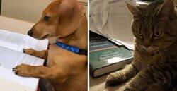 Enlace a Esta profesora pidió a sus estudiantes que mostraran a sus perros haciendo los deberes