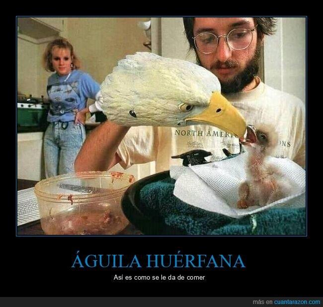 águila,dando de comer,huérfana