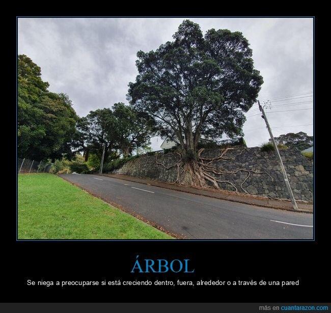 árbol,raíces,wtf