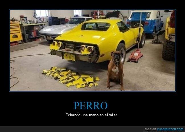 coche,perro,taller,wtf