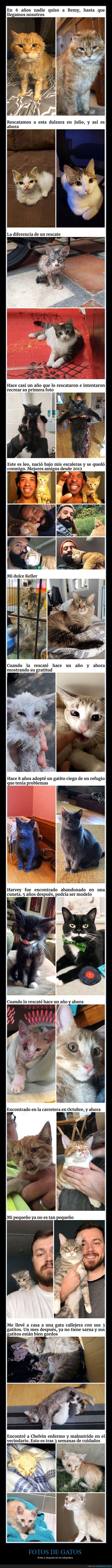 adopción,antes,después,gatos