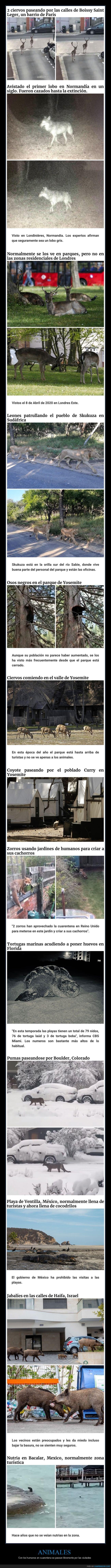 animales,coronavirus,cuarentena,humanos