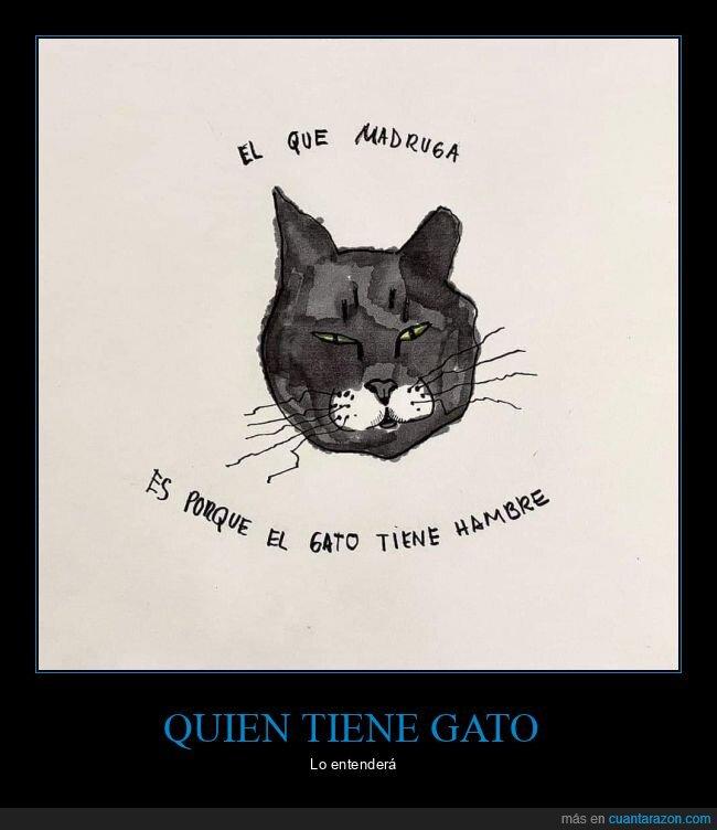 gato,hambre,madrugar