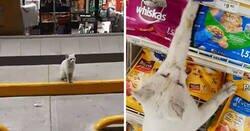 Enlace a Este gato callejero tan listo llevó a una mujer a la tienda y le pidió que le comprara comida, así que ella lo adoptó