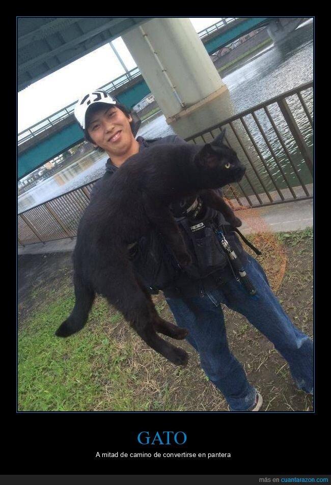 gato,gigante,wtf