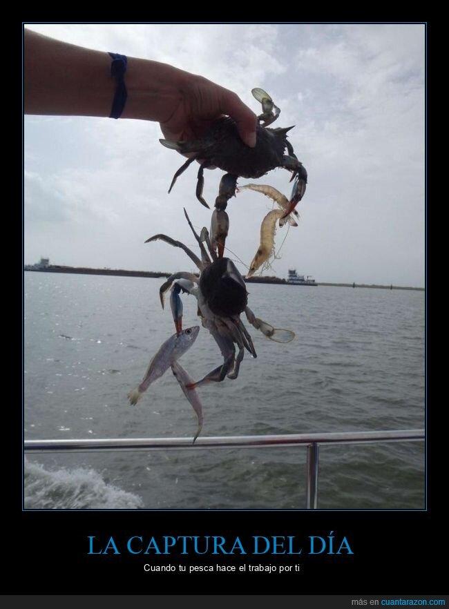 cangrejo,cangrejos,gamba osaka,pec,pesca,win
