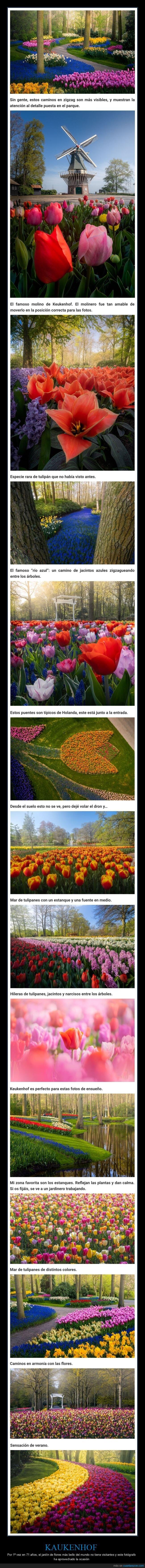 fotografía,holanda,jardín de flores,keukenhof