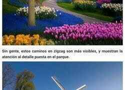 Enlace a Por 1ª vez en 71 años, el jardín de flores más bello del mundo no tiene visitantes