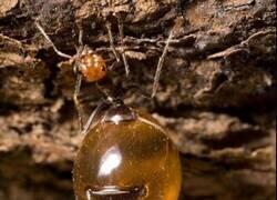 Enlace a Repleta de miel