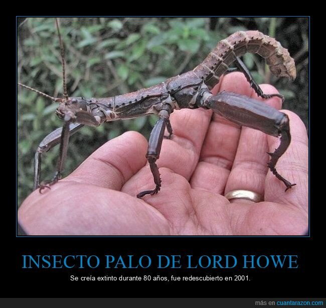 extinto,insecto palo,lord howe,redescubierto