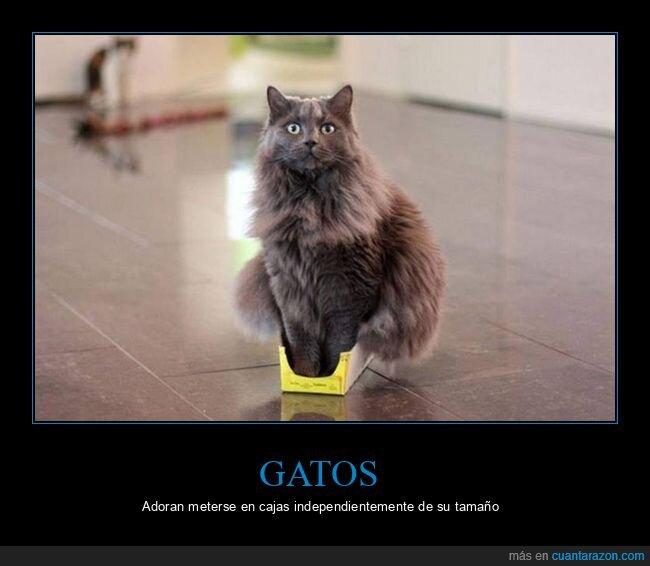 caja,gato,wtf