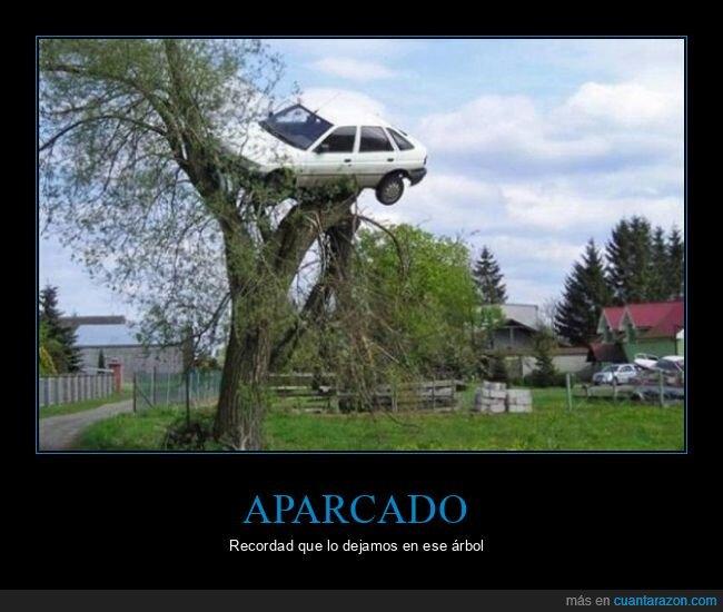 árbol,coche,fails,wtf