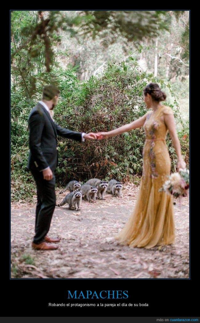 boda,foto,mapaches