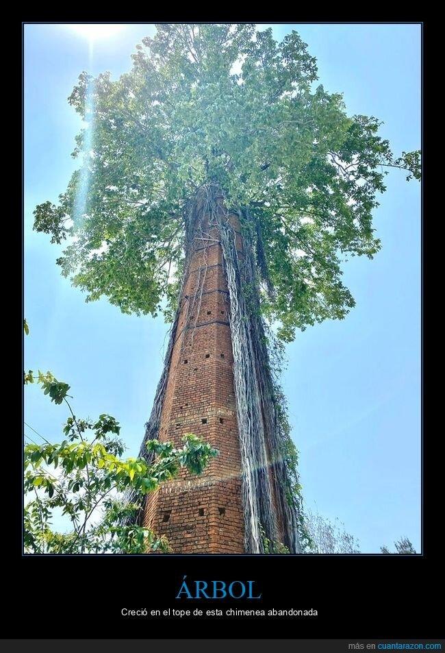 árbol,chimenea,crecer