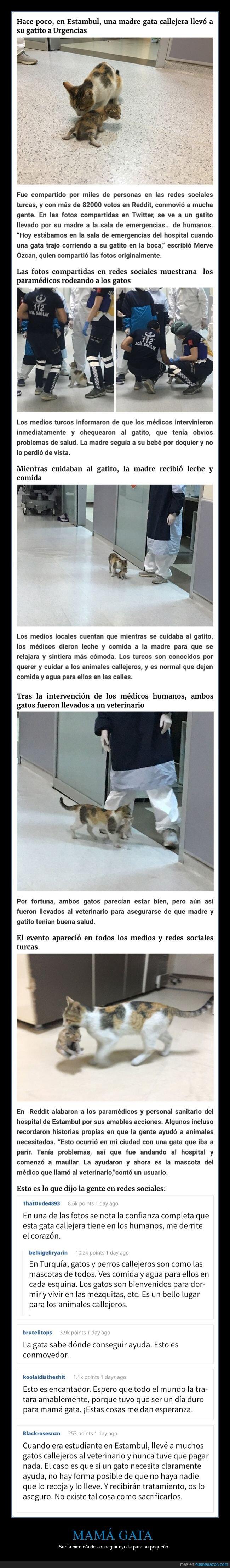 ayuda,gata,hijo,hospital,padre