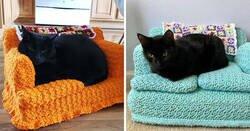 Enlace a Esta mamá gata llevó a su gatito enfermo al hospital, y los médicos se apresuraron a ayudarlos
