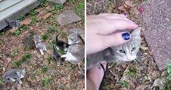 Enlace a Esta gata callejera llevó a conocer a sus crías a la mujer que llevaba unos días dándole de comer