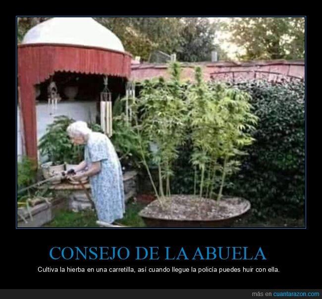abuela,carretilla,hierba,policía