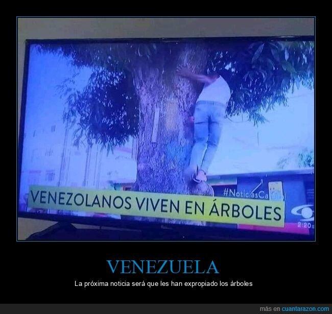 árboles,noticias,venezolanos,venezuela,vivir,wtf
