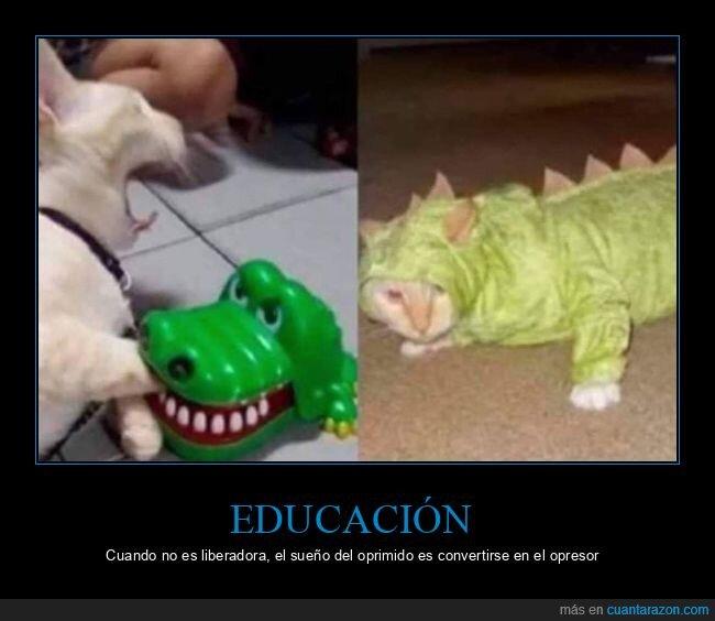 cocodrilo,educación,gato,liberadora,opresor,oprimido