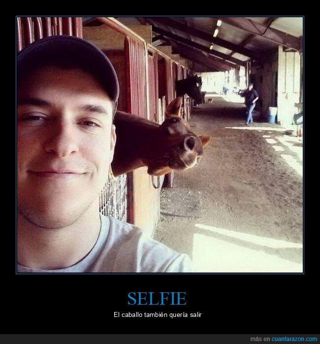 caballo,photobomb,selfie