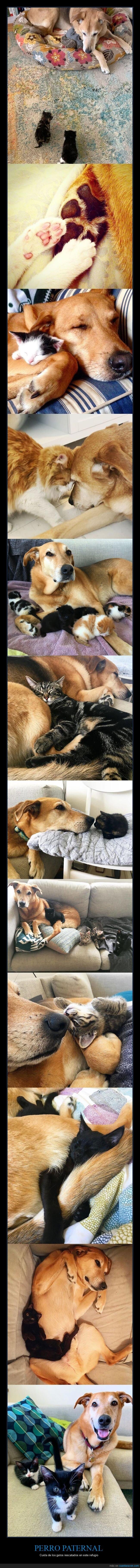 cuidar,gatos,perro,refugio