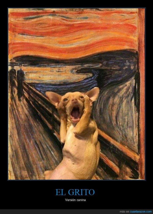 chihuahua,el grito,perro