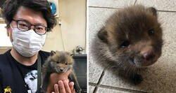 """Enlace a Este japonés pidió ayuda en redes sociales para encontrar a los dueños de un """"perrito"""" que encontró, y resulta que no era un perrito"""
