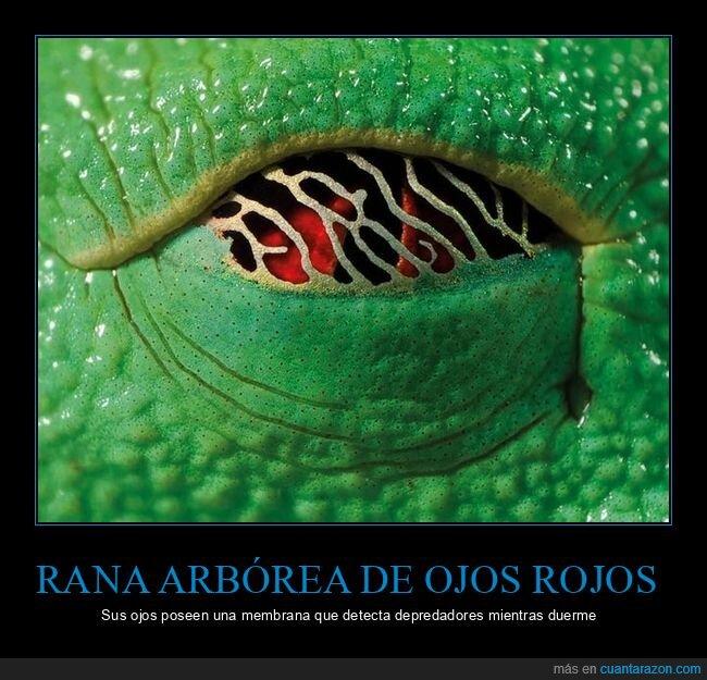 curiosidades,membrana,ojos,ranas