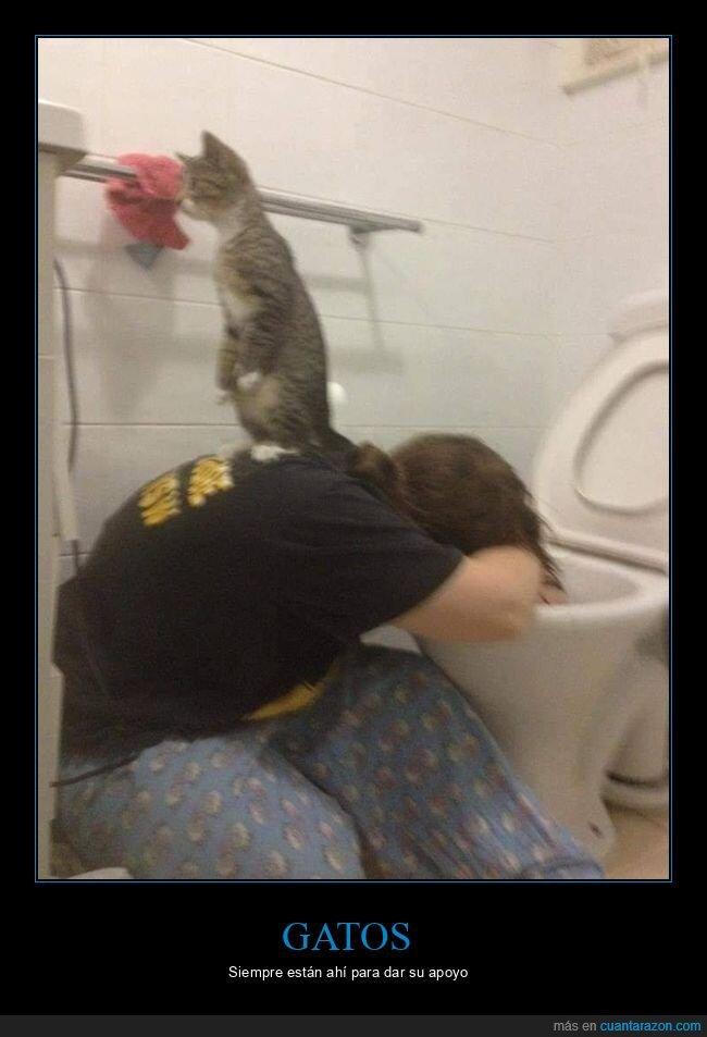 espalda,gato,váter