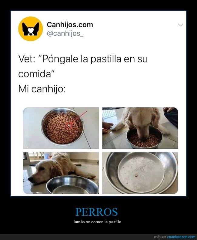 comida,pastilla,perros