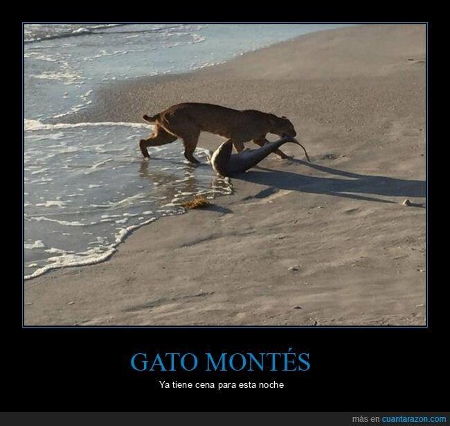gato montés,playa,tiburón,wtf