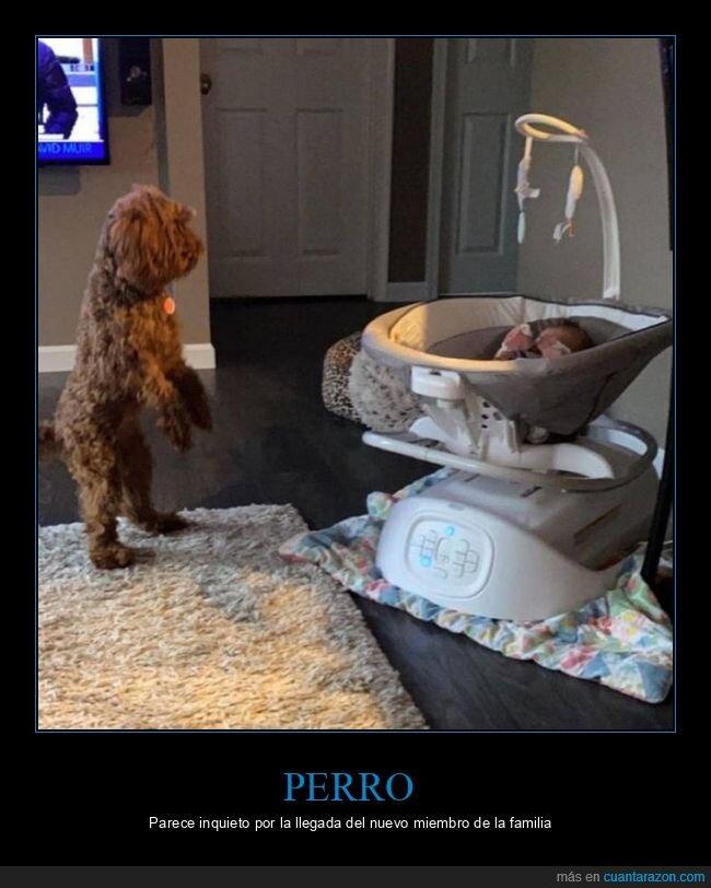 bebé,de pie,perro
