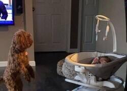 Enlace a El perro se está comportando raro desde la llegada del bebé...