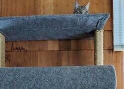 Enlace a Los gatos siempre desafiando las leyes de la física